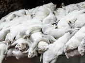 Vison Ravi Covid camps concentration animale