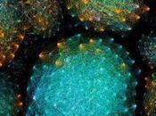 MICROBIOTE Comment notre corps chérit bonnes bactéries