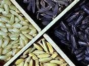 ALIMENT riz, plante fascinante