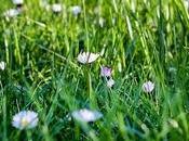 Comment débarrasser mauvaises herbes dans gazon