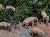 éléphants vadrouille nouvelle attraction vogue Chine