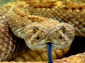 Pourquoi acheter pince serpent