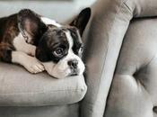 Comment occuper chien s'ennuie