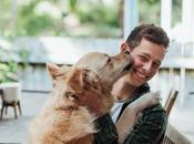 Comment calmer chien hyper sensible