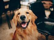 Quelle race chien adaptée votre mode
