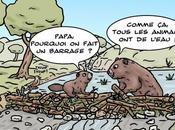 castors biodiversité